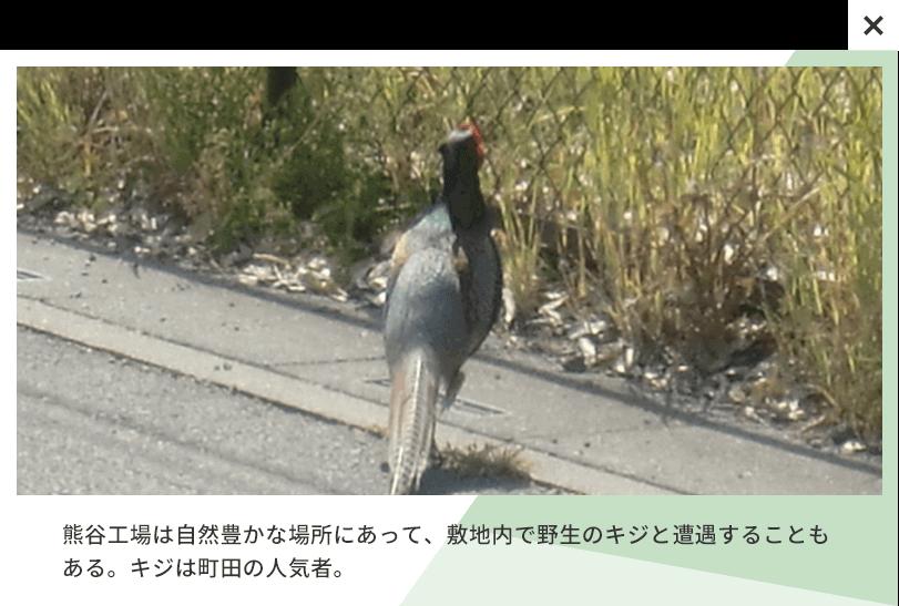 熊谷工場は自然豊かな場所にあって、敷地内で野生のキジと遭遇することもある。キジは町田の人気者。
