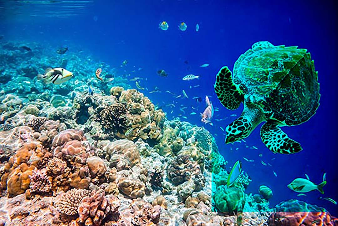 地球温暖化とサンゴ礁のお話